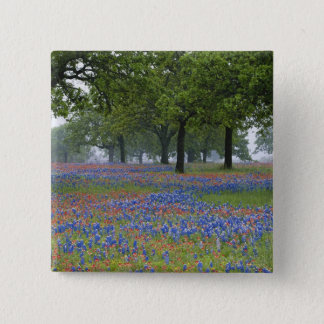 Texas, Texas Hill Country, Texas Paintbrush and 15 Cm Square Badge