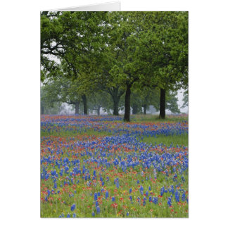 Texas, Texas Hill Country, Texas Paintbrush and Card