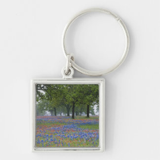 Texas, Texas Hill Country, Texas Paintbrush and Key Ring