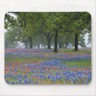 Texas, Texas Hill Country, Texas Paintbrush and Mouse Mat