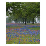 Texas, Texas Hill Country, Texas Paintbrush and Print