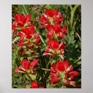 Texas Wildflower Print