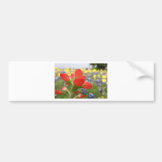 Texas Wildflowers Bumper Stickers