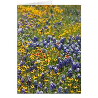 Texas Wildflowers by Cynthia Wenslow Card