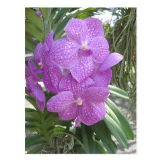 Thai Orchid Postcard