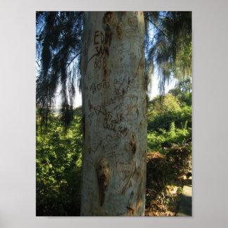 Thai Tree Graffiti Posters