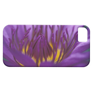 Thailand, Bangkok, Purple and yellow lotus 2 Case For The iPhone 5