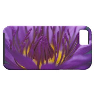 Thailand, Bangkok, Purple and yellow lotus 2 iPhone 5 Cover