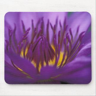 Thailand, Bangkok, Purple and yellow lotus 2 Mouse Mat