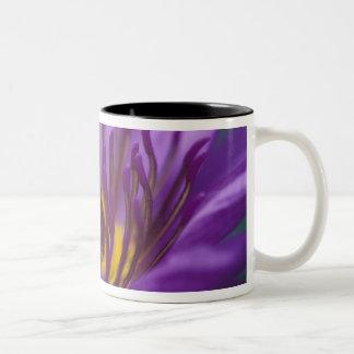 Thailand, Bangkok, Purple and yellow lotus 2 Two-Tone Coffee Mug