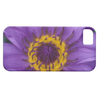 Thailand, Bangkok, Purple and yellow lotus iPhone 5 Cases