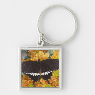 Thailand, Khon Kaen, The Banded Mormon Silver-Colored Square Key Ring