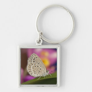 Thailand, Khon Kaen, The pale grass blue Silver-Colored Square Key Ring