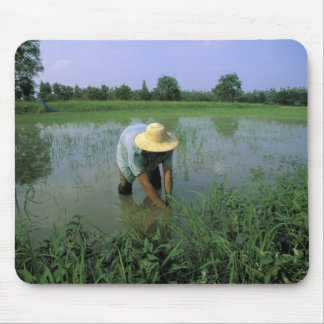 Thailand, Sukhothai. Rice farmer. MR. Mouse Mat