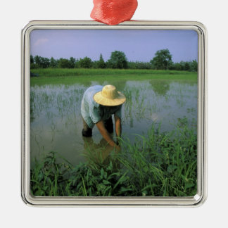 Thailand, Sukhothai. Rice farmer. MR. Silver-Colored Square Decoration