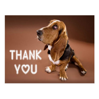 Thank You Basset Hound Puppy Dog Brown Postcard