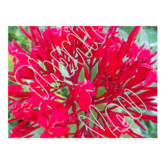 Thank You Beautiful Awesome Red flowers Postcard