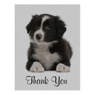 Thank You Border Collie Puppy Dog Post Card
