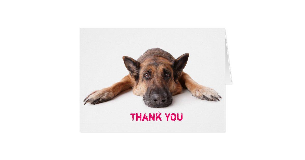 Best Thank You Card German Shepherd Dog | Zazzle.co.uk PF41