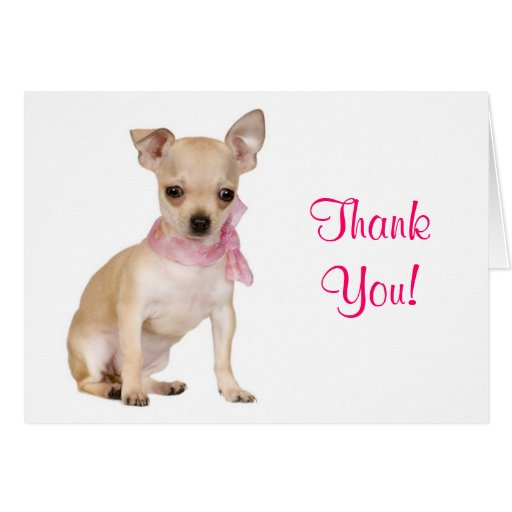 Dog Thank You Cards | Dog Breeds Picture Unique Looking Dog Breeds