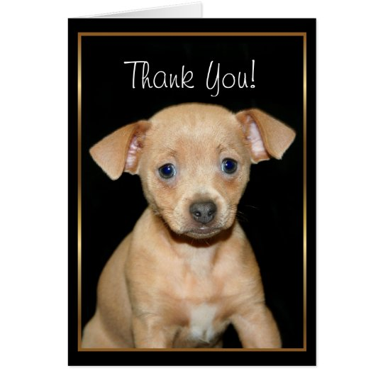 Thank You Chihuahua puppy greeting card