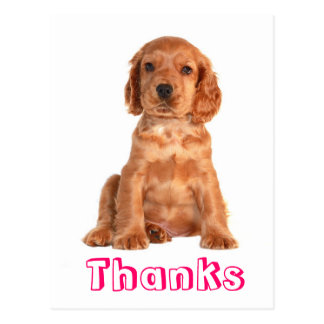 Thank You Cocker Spaniel Puppy Dog Postcard