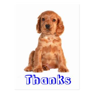 Thank You Cocker Spaniel Puppy Dog Postcard
