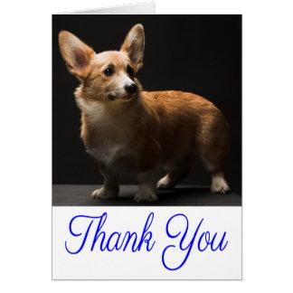 Hanne's Thanks ♥ Thank you shadowscat85 + Zeadtra! - Page ...  Thank You Cute Corgi Puppy