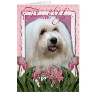 Thank You - Coton de Tulear Card