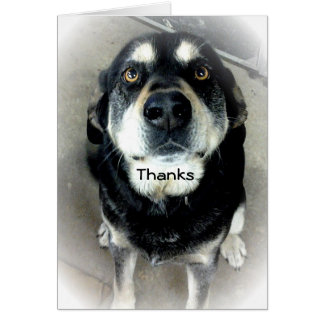 Thank You Dog Note Card