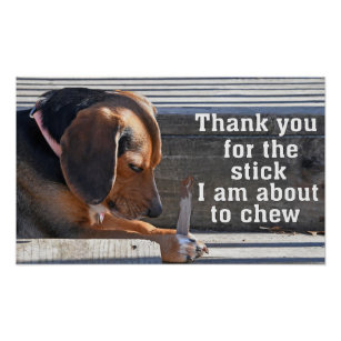 a3d9d73dde47 Thank you for the stick I am about to chew Beagle Poster