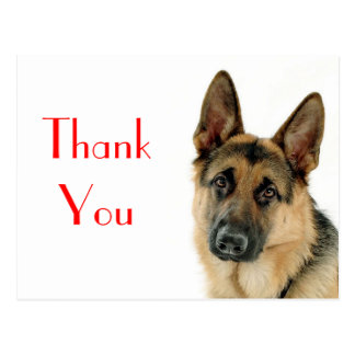 Thank You German Shepherd Puppy Dog Post Card