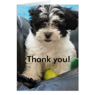 Thank you! Havanese Puppy Card