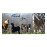 Thank You- Horses, Pony, and Donkey Photocards Picture Card