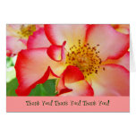 Thank You! Note Cards Red White Rose Flowers