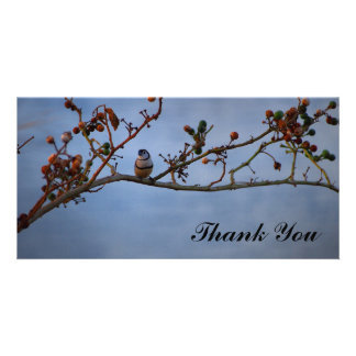 Thank You photo card with double barred finch