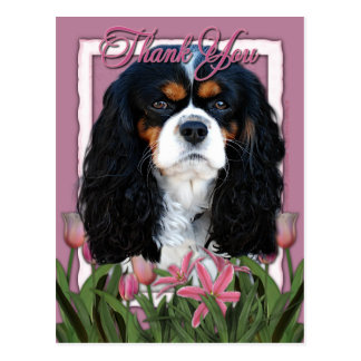 Thank You - Pink Tulips - Cavalier - Tri-Color Postcard