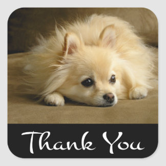 Thank You Pomeranian Puppy Dog Stickers / Labels