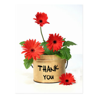 Thank You Red Gerbera Daisy Flower Pot Post Card