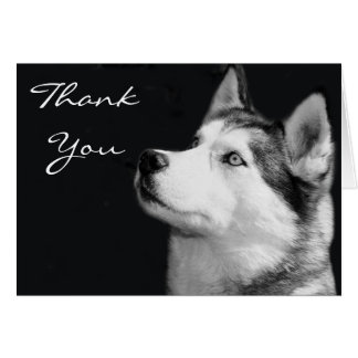 Thank You Siberian Husky Greeting  Card