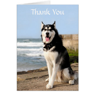Thank  You Siberian Husky on Beach Greeting  Card