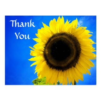 Thank You Yellow Sunflower Greeting Postcard
