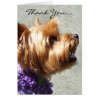 Thank You Yorkshire Terrier Greeting Card