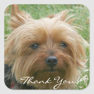 Thank You Yorkshire Terrier Stickers