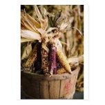 thanksgiving harvest corn postcard
