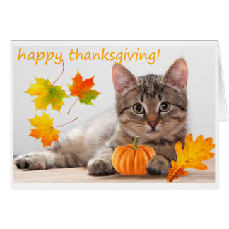 Thanksgiving kitten card