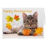 Thanksgiving kitten greeting card