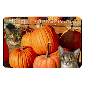 Thanksgiving kitties and pumpkins magnet