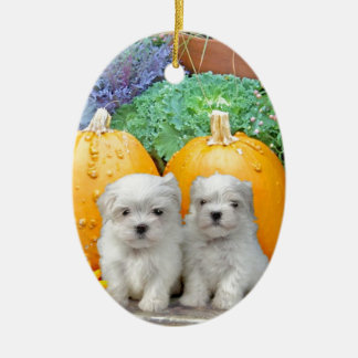 Thanksgiving Maltese puppies Christmas Ornament