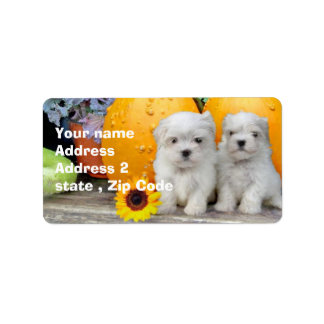 Thanksgiving Maltese puppies Address Label
